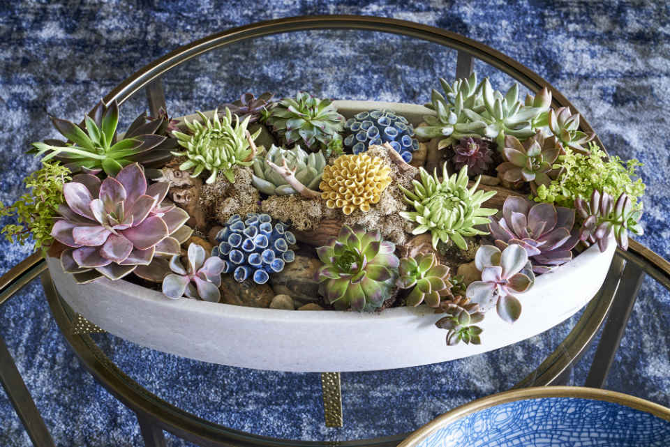 Succulent Garden Interior Design By Liepold Design Group